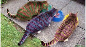 Body-painting sur chats, c'est beau, mais horrible pour ces félins!