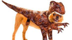 Déguisements  insolites de chiens pour la fête d'Halloween
