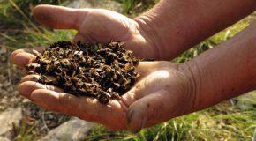 La disparition des abeilles inquiète, le monde est en danger!