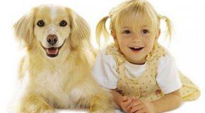 Drôles de ressemblances entre humains et chiens et chats!