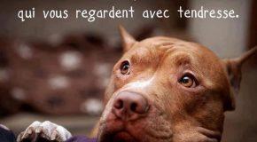 Diaporama trop cool sur les chiens avec des vérités et des photos
