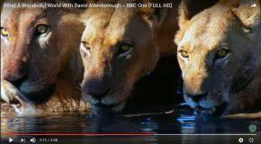 What A Wonderful World avec David Attenborough et des photos uniques
