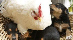 Nouvelles photos d'animaux qui nous viennent  d'ailleurs. Ils ont un grand cœur !
