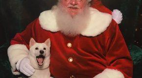 Une chienne qui adore le Père Noël le rencontre en vrai!