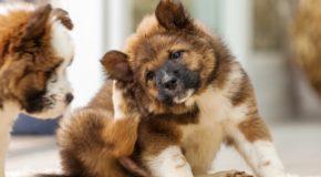 Conseils et vérités sur les chiens en général, des études intéressantes à découvrir