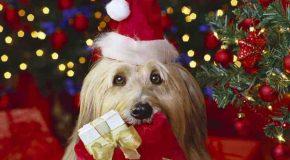 Des animaux à Noël, ils font la fête, nos amis!
