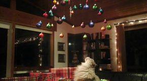Le sapin de Noël et les chats et chiens, une solution existe toujours
