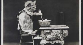 Les chats de 1915 dans des clichés en noir et blanc et des mises en scène