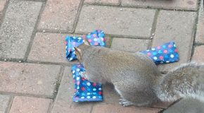 Des petits cadeaux de Noël pour les écureuils de leur quartier
