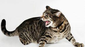 Belle leçon sur les chats, à voir et lire en entier pour mieux les adorer