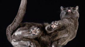 Les chats vus autrement, un projet du photographe Andrius Burba