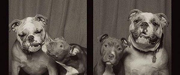 Des chiens s'amusent dans un photomaton grâce à Lynn Terry