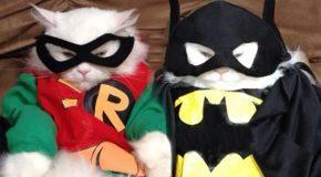 Cosplay pour chats, les gens font n'importe quoi de leur matou!