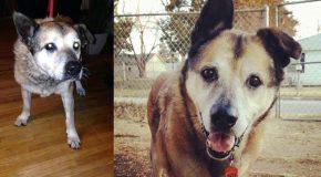 Des chats et des chiens dans des clichés avant-après leur adoption
