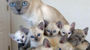 Chatte et chatons qui portent les mêmes robes et qui ont les mêmes yeux