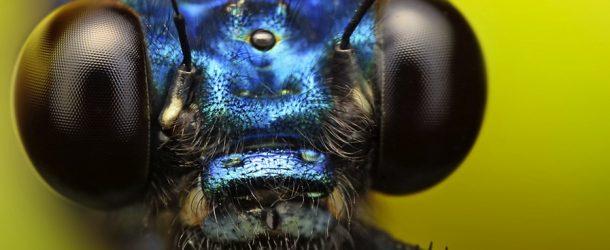 Insectes et plantes vus au macro, c'est un autre monde qui nous entoure!