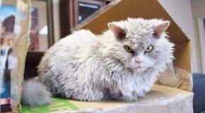 Ce chat à l'apparence méchant séduit du monde sur Instagram , c'est un beau matou très gentil!