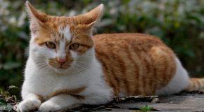 Des chats dans la rue au Japon, ils ne demandent qu'un peu d'attention, les pauvres amours!