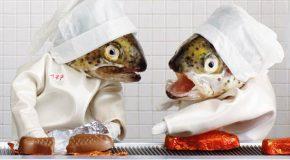 Les poissons mis en scène par l'artiste-photographe Française Anne Catherine Becker Echivard
