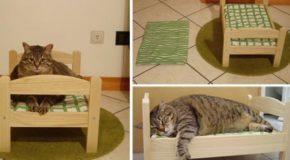 Des lits pour chats, chiens et lapins, faits sur mesure. Ces animaux  de compagnie ont tout ce qu'il leur faut!