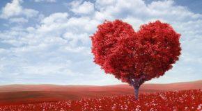 L'amour avec tout ce qu'il a de beau, mais aussi de triste, de solitaire