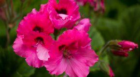 Des fleurs de toutes les variétés pour les personnes qui savent les apprécier
