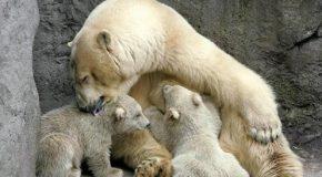 Les plus belles photographies de mamans animaux et leurs petits