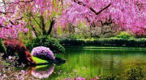 Le printemps avec de sublimes clichés de fleurs et des poèmes