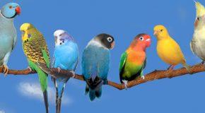Céline Dion chante «Les Oiseaux du Bonheur», les clichés sont supers!
