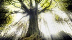 Les arbres, la lumière qui filtre entre eux et une musique relaxante!