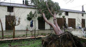 Retour sur la tempête Klaus du 24 janvier 2009 qui a frappé la France