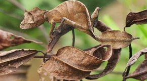 Camouflage, un phénomène dont certains animaux sont des experts!