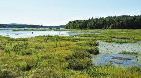 Les Marais-du-Nord, une réserve naturelle au Québec au Canada