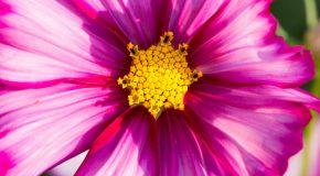 Fleurs, champignons, la flore est détaillée sur fond de musique