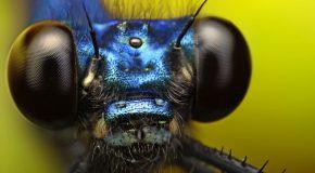 Macrophotographies surprenantes, le monde des insectes est superbe!