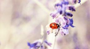 65 clichés de la flore, de la faune, mais en mode macro, images du Japon!