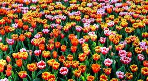 Hommage au  printemps, la plus belle des saisons!