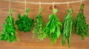 Les fines herbes, des éléments très bénéfiques en cuisine et pour la santé