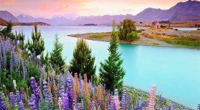 Les plus beaux paysages et les fleurs les plus fraîches en cadeau!
