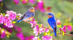 De très beaux paysages et des oiseaux en plus d'une jolie musique!