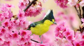 Les plus beaux oiseaux de notre planète dans de magnifiques clichés