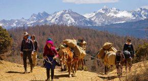 Flore et faune de l'Himalaya avec un accompagnement musical très agréable