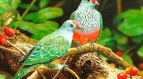 Petite devinette sur les noms des oiseaux et superbes photographies