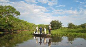 Le Pantanal, un paradis écologique