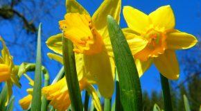 Le printemps s'en va, sa beauté et sa fraîcheur restent