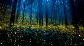 Le silence dans une forêt, un moment de détente qui fait du bien