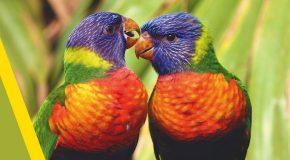 Des animaux en tous genres, les couleurs et la musique