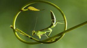 Florilège de clichés d'animaux pour montrer leur beauté