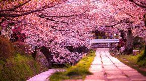 Les plus beaux paysages du Japon, le pays du soleil levant!