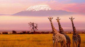 Pays d'Afrique dans une présentation-voyage pour rêver